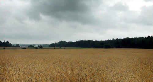 F�R SENT Efter en torr sommar var regn �nskat, men det kom precis n�r det var sk�rdedags.