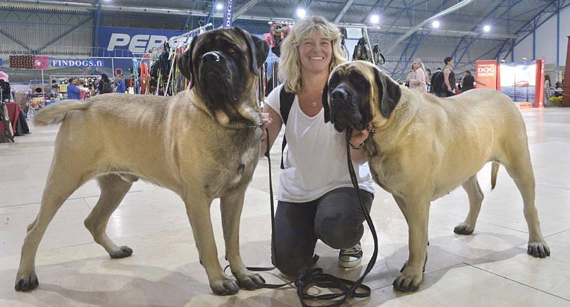 SYSKON Syskonen och tillika engelska mastifferna Lufsen och Juliette, tillsammans med Jill Kuoppa, Stenhamra. Juliette vann Bäst i ras.