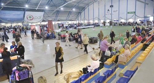 NOBBADE 2050 hundar t�vlade i Viking Line dog show i Ecker�hallen i helgen. Men de kunde ha varit fler.