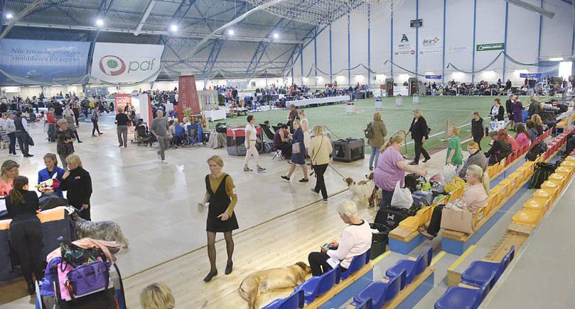 NOBBADE 2050 hundar tävlade i Viking Line dog show i Eckeröhallen i helgen. Men de kunde ha varit fler.