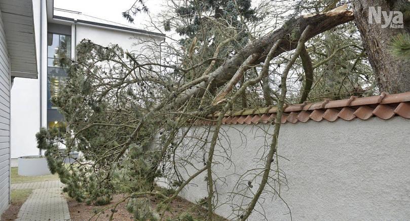 TVÅ MÅNADER Trädet vid Trobergshemmet blåste ned i januari och har ännu inte åtgärdats på grund av att platsen är svårtillgänglig.