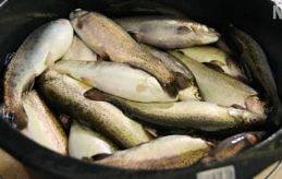 MYCKET ARBETET ÅTERSTÅR Ska de havsbaserade fiskodlingarna ha en chans att klara de allt strängare miljökraven och medvetna konsumenter måste miljöskyddsarbetet ha en hög ambitionsnivå hos alla inblandade.