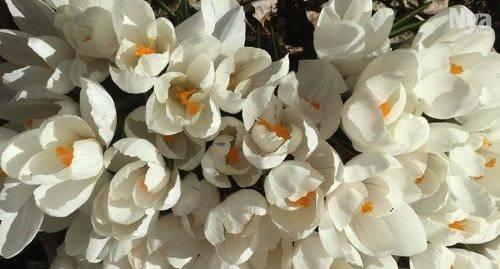 FICK FART De varma dagarna satte fart på blommor och insekter men också på mindre trevligt pollen. Just nu är det höga halter av al och hassel som ställer till det för allergikerna.