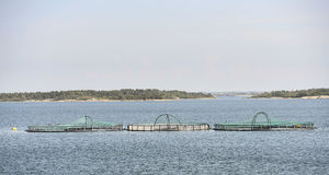 Genom att använda så kallat Östersjöfoder kan fiskodlarna reducera sina utsläpp av näringsämnen i havet.
