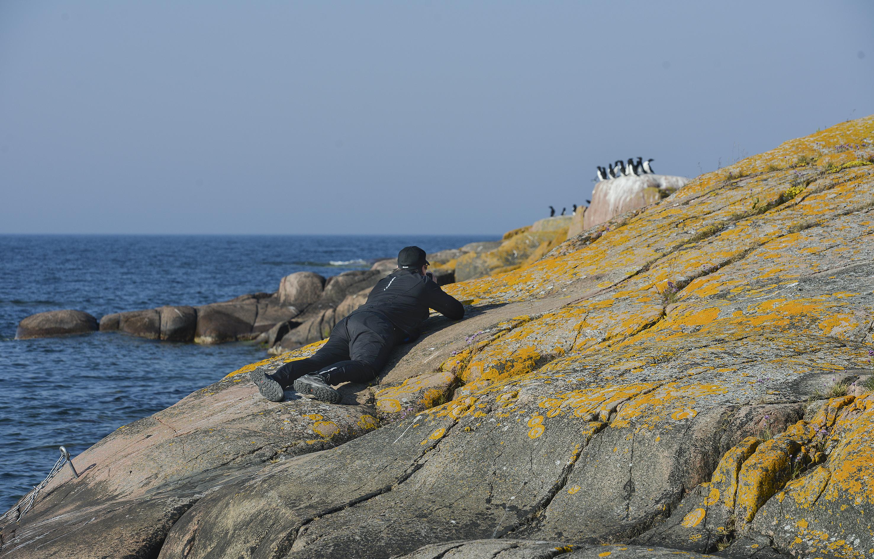 Johan Ekholms bror Filip Ekholm var med och fotograferade fåglar under sin semester.