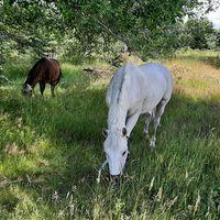 Foderponny/häst