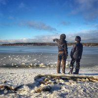 Vi är en svensk familj som vill flytta till Åland!