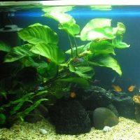 Akvariefiskar +växter